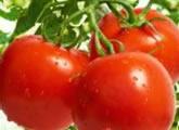精选十个西红柿治病美容加养生偏方