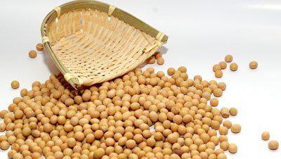黄豆的营养价值