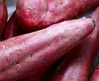 凉薯的营养素含量