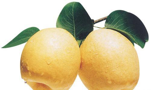 秋季吃梨正当时,十种秋梨各不同(7)