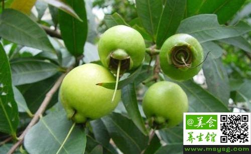 蒲桃是什么