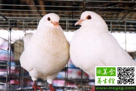 鸽子的营养价值和食疗集锦(1)