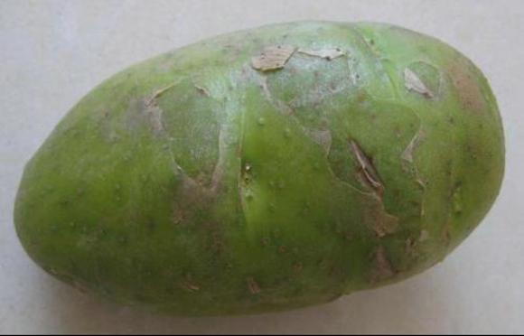 什么样的土豆不能吃