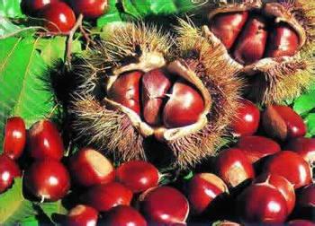 冬季怎样吃板栗最养生