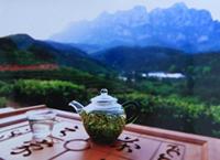 绿茶精品:庐山云雾茶的起源